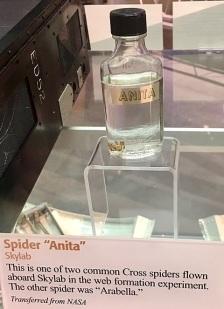 anita skylab spider web