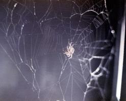 arabella sklyab spider web