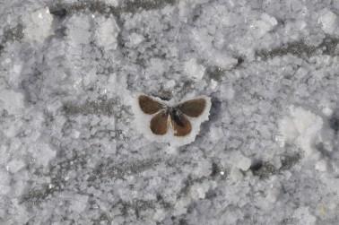 frozen moth | Chelsea Scrolls