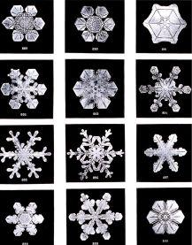 snowflake | Chelsea Scrolls