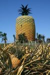 """Big Pineapple"" in South Africa"