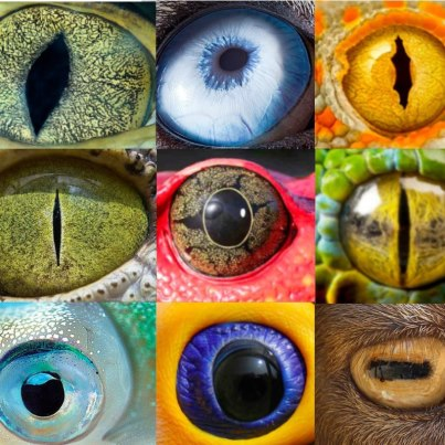 Guess the eye!