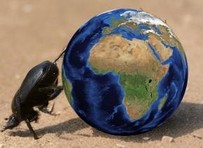 Atlas dung beetle | Chelsea Scrolls