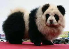 why save the panda when we got em right here?