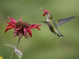 Houston the hummingbird has a problem