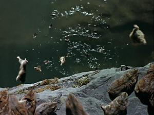 "leapin' lemmings (screen shot from ""White Wilderness)"