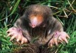 Mole McWhack: not it