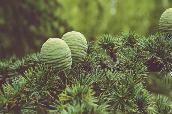chelsea schuyler conifer post