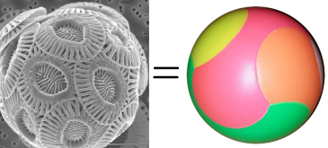coccoliths and puzzle ball