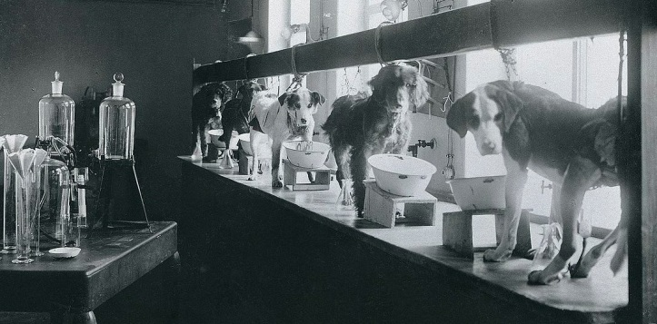 pavlov dogs