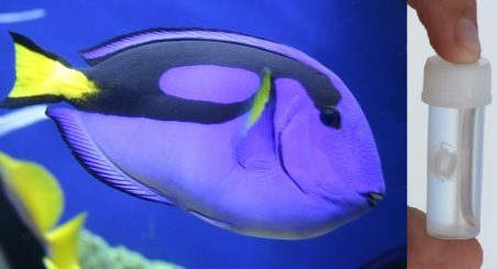 blue tang and box jelly
