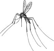 mosquito | chelsea scrolls