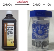 catalase and hydrogen peroxide | Chelsea Scrolls